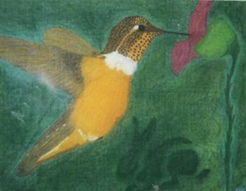 Abu Ali - Hummingbird